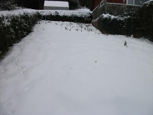 My garden - 23rd December 2010