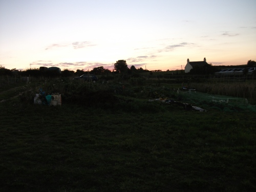 Allotment at sun set - 30th August 2010
