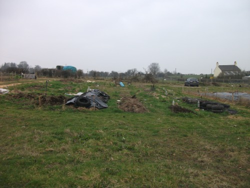 Allotment; taken from the 'plot' end - 28th March 2011