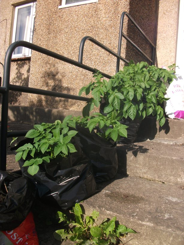 Potato planter - 22nd May 2011