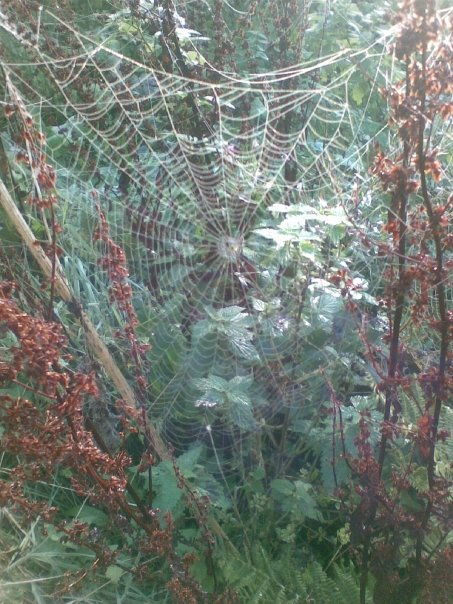 Morning dew on a spiders web - October 2009
