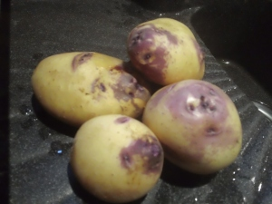 Pick of the crop; self-sown potatoes - 17th July 2012