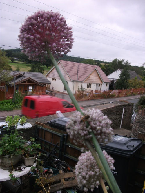 Front garden blooms; leeks ~ August 2012