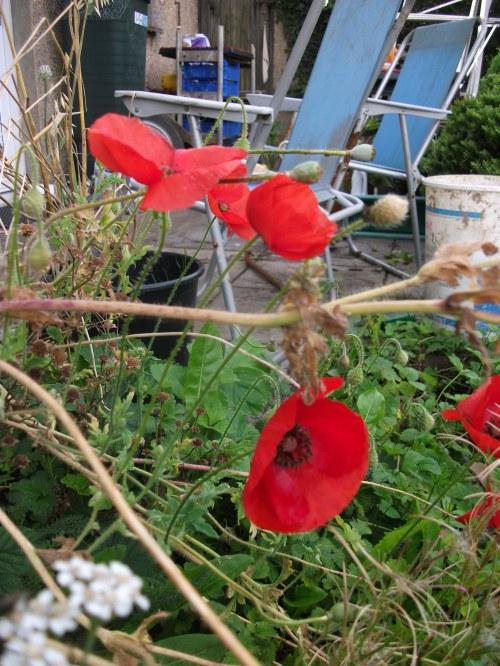 Front garden blooms ~ August 2012