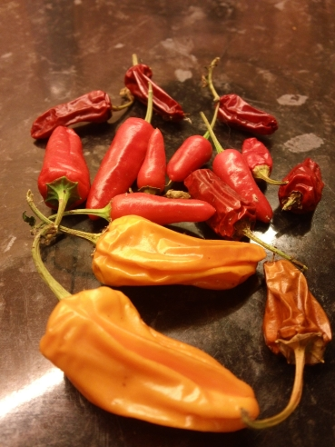 Chilli Harvest; a little dried after a week on a kitchen worktop - November 2012