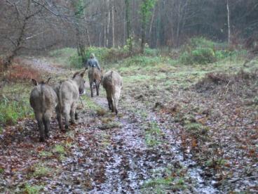 Donkey walk - November 2012