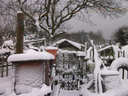 Back garden snow - 18th January 2013