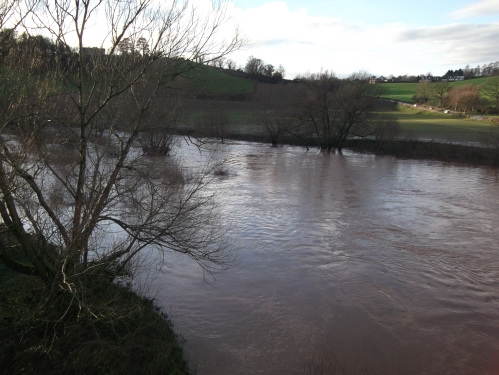 The swollen river Wye with the first signs of spring: catkins - 17th January 2014