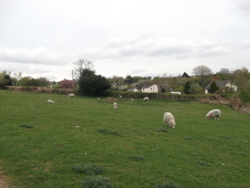 Common of ewes and lambs ~ April 2014