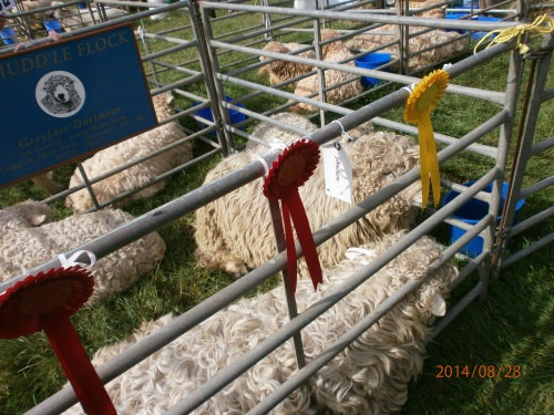 Sheep Judging at Monmouth Show 2014