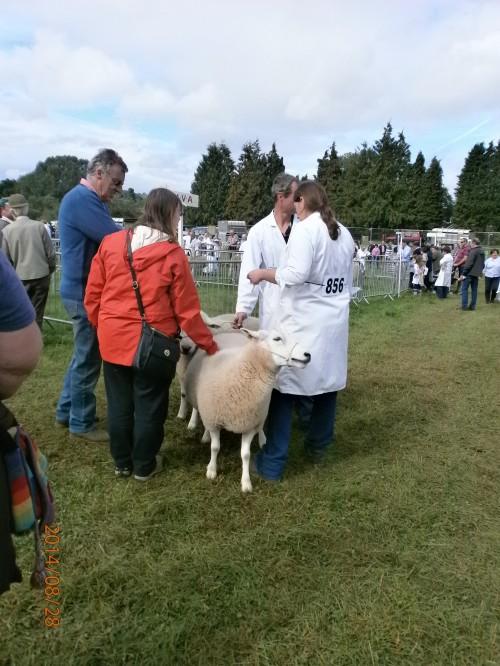 Sheep Judging at Monmouth Show 2014