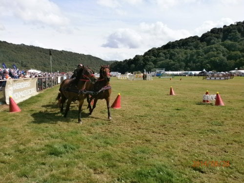 Scurry races Monmouth Show 2014