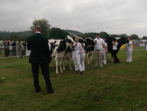 Cattle area Usk Show 2014