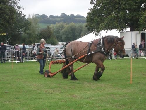 Rowan Working Horses Usk Show 2014