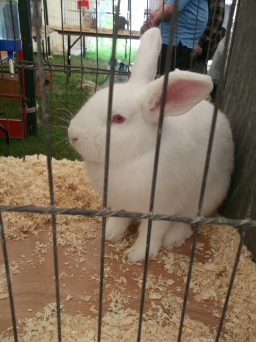 Rabbit tent Usk Show 2014