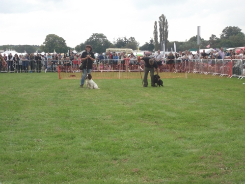 Gun dog display Usk Show 2014