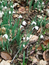 Signs of spring ~ 31st of January 2016